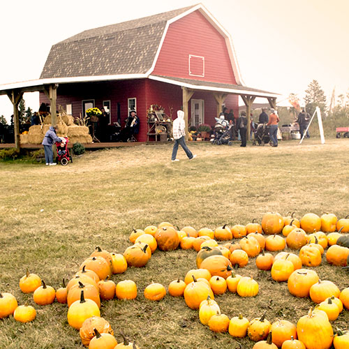 Come find and pick the perfect pumpkin at The Jungle Farm and General Store in Red Deer, Alberta