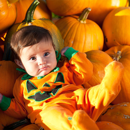Come find the perfect pumpkin at The Jungle Farm and General Store in Red Deer, Alberta