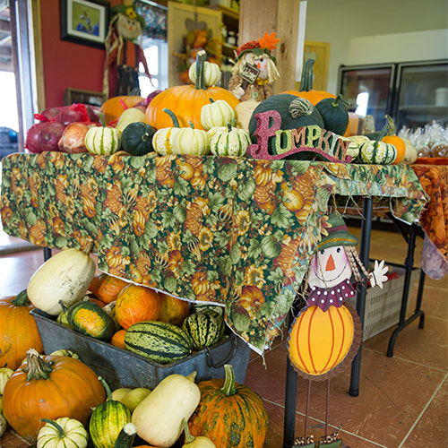Find the perfect pumpkin at The Jungle Farm u-pick strawberries, pumpkins, fall festival in Red Deer, Alberta