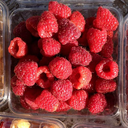 Pick your own raspberries too, at The Jungle Farm and General Store in Red Deer, Alberta
